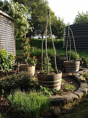 I also made my tomato trellises out of willow branches cut from the garden. About two weeks after I took this they sprouted! I'll have to remove them and dry them in the sun or they will suck all of the nutrients from the tomatoes.  Australian Town and Country