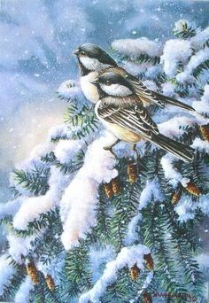 Birdy at Wintertime