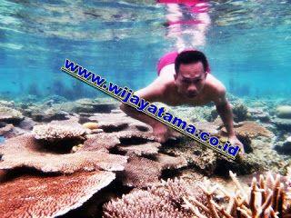 Travel Pulau Seribu: Promo Paket Wisata Agen TravelPulau Seribu. http://wijayatama.co.id