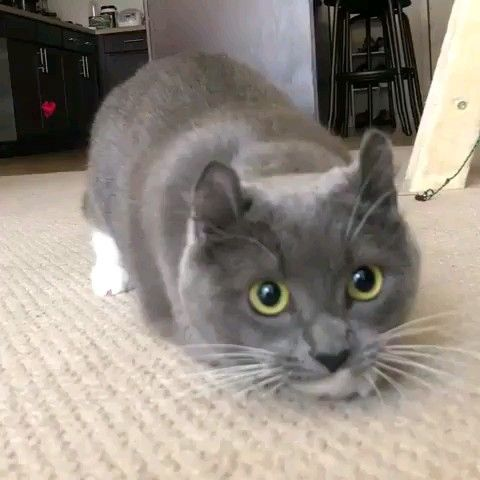 Cat jump – Tiere