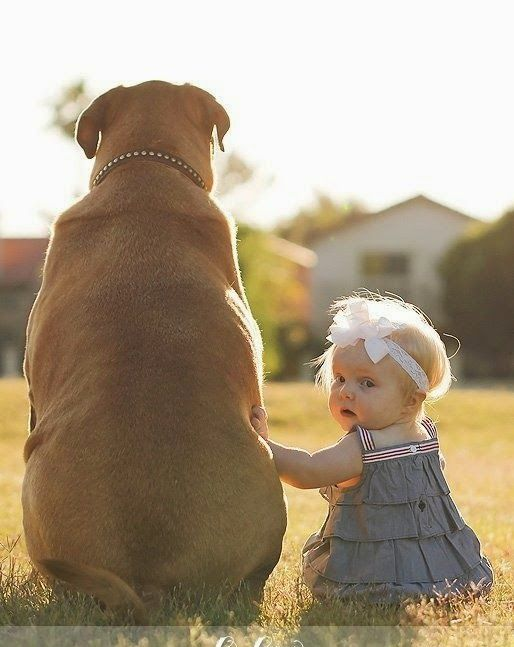 Top 5 Best Guard Dogs For Families