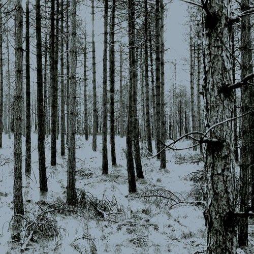Wallpaper Forest Blue