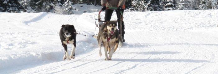 Husky Schlittentour und Schneeschuhwanderung - Outdoor Erlebnis der Extraklasse!  http://www.sports-proemotion.de/angebot/husky-erlebnistag/