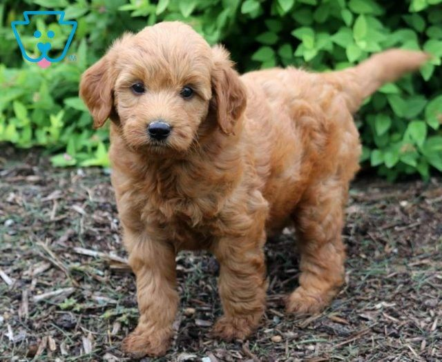 Puppy Finder Find Buy A Dog Today By Using Our Petfinder Puppy Finder Puppies Cute Baby Puppies