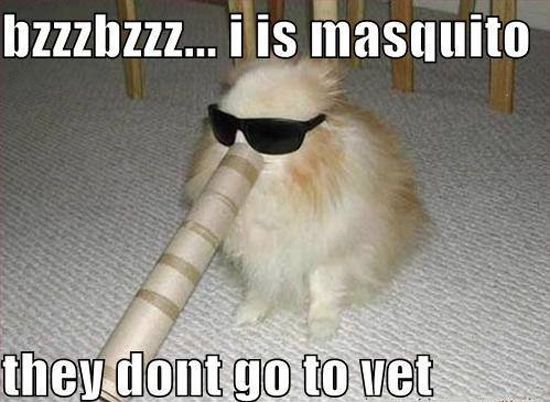 Mosquitoes dont go to the vet :)  Keep #dogs and #cats healthy, learn everything about #pet health here                                                                                                                                                                                 More