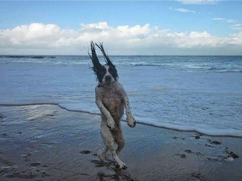 Best Dog Videos 2013