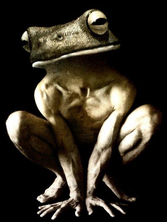 Creatures hybrides - Francesco Sambo (7)