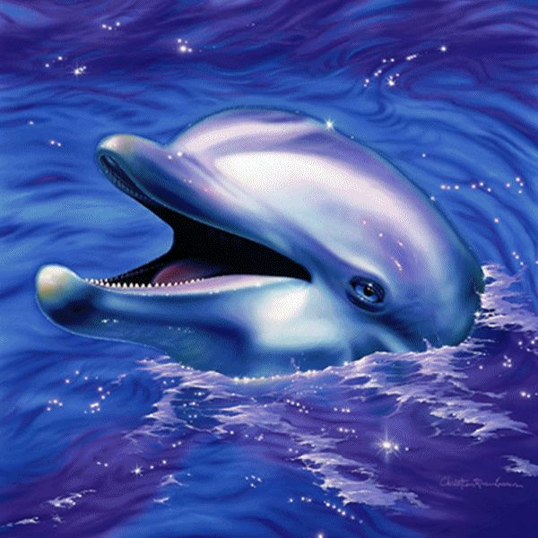Открытки определений, картинка дельфин анимация