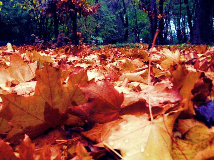 Autumn - Iasi - Parcul Copou