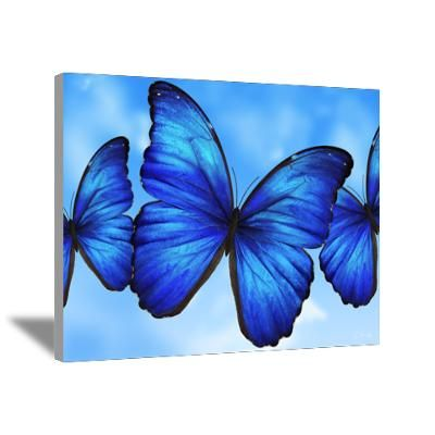 blue butterfly painting art | CafePress > Wall Art > Canvas Art > Blue Butterfly Canvas Art