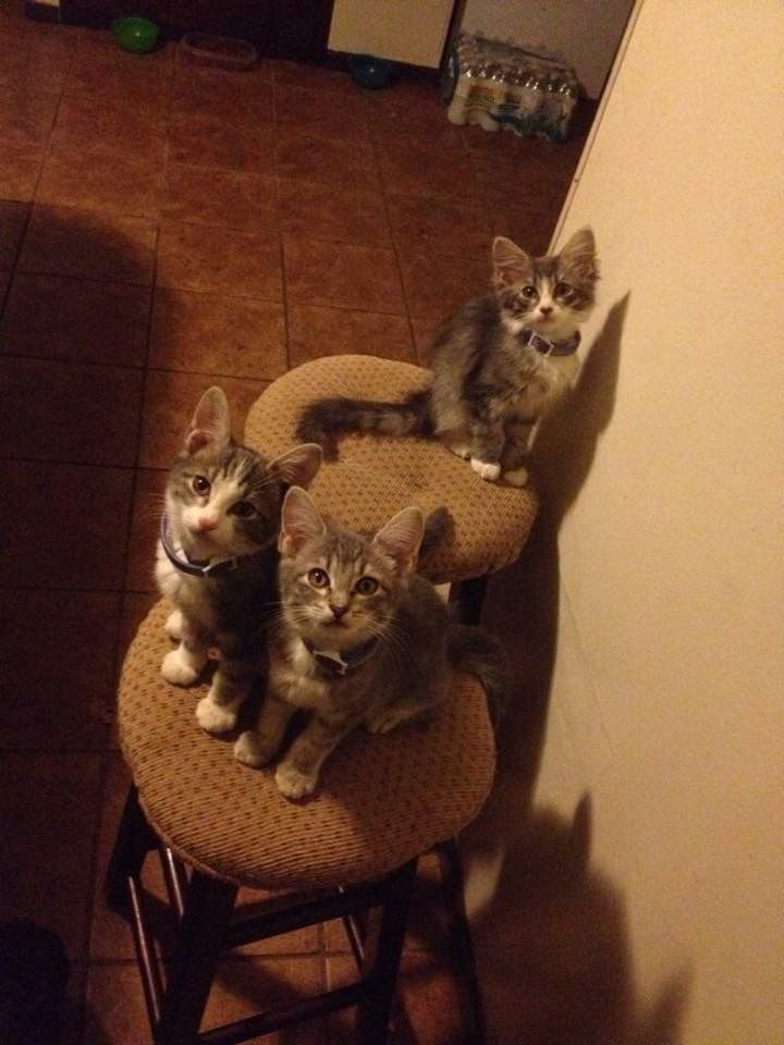 """""""Well, we're waiting. Where are the treats?"""""""