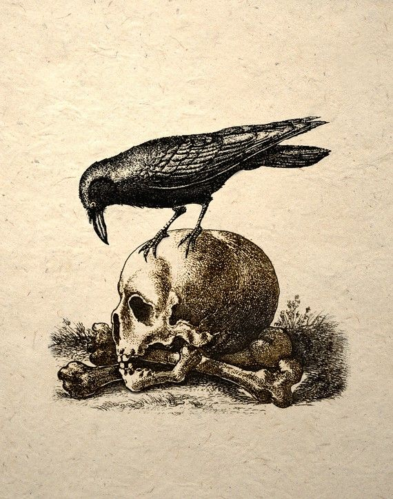 Crow On A Skull Gothic Macabre Art Print Medieval by TigerHouseArt
