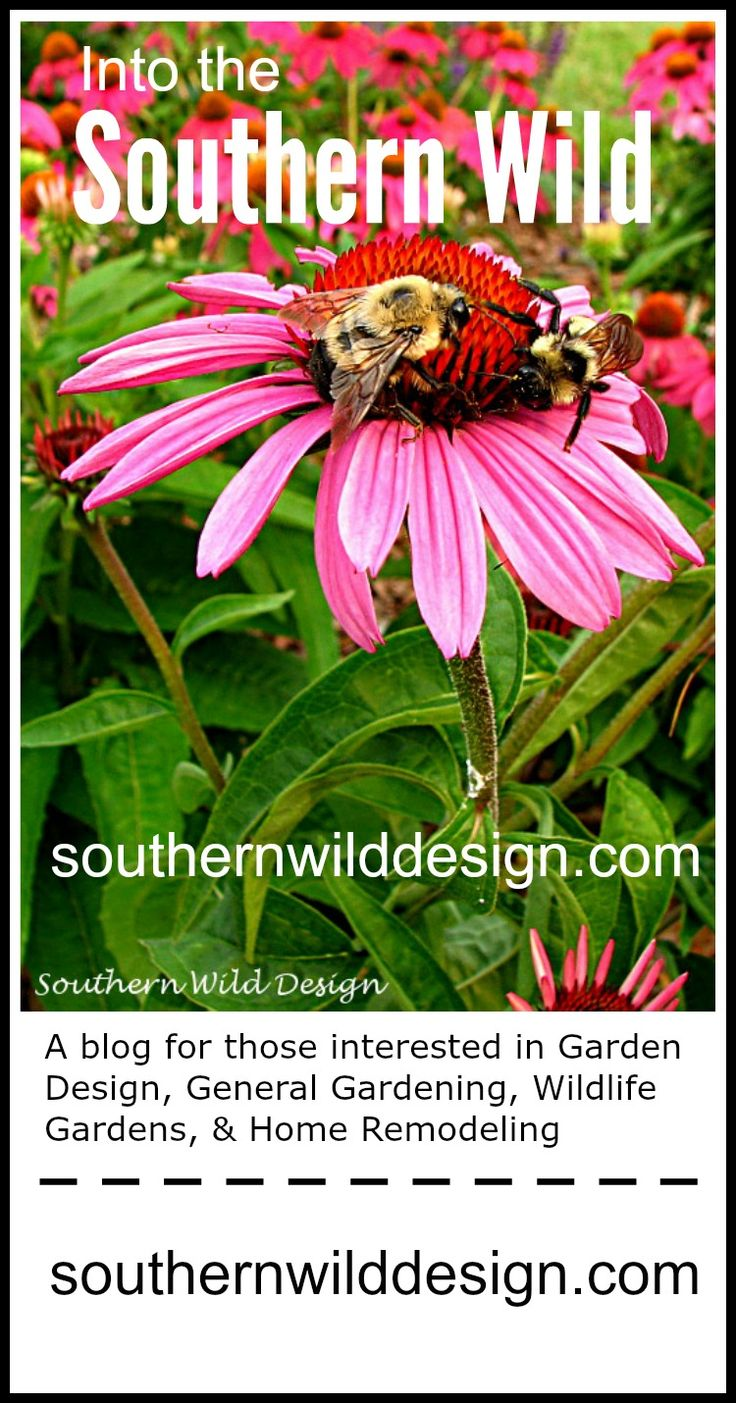 Learn About Garden Design, Pollinator Gardens, And More!