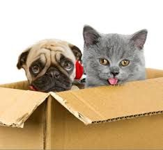 Pet Transport Services And Your Pets Move