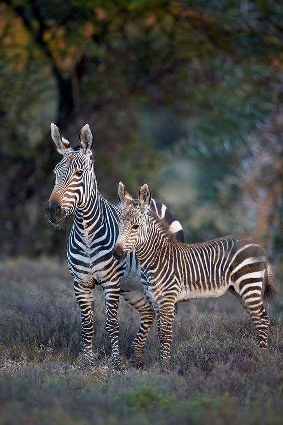 Pin von Karin auf Africa | Pinterest | Tiere, süße Tiere und wilde Tiere