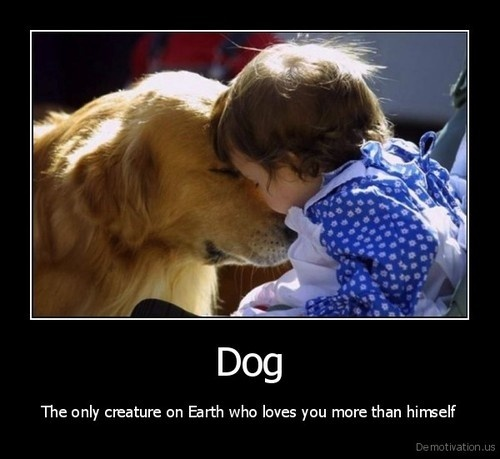 Dog: The only creature on earth who loves you more than he loves himself.