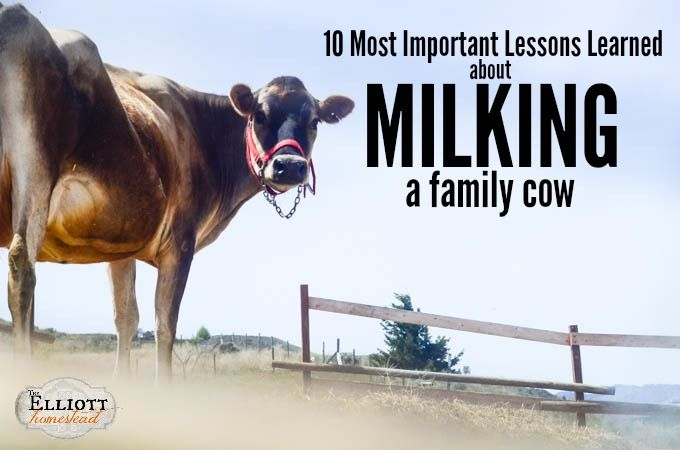10 Most Important Lessons Learned About Milking A Family Cow