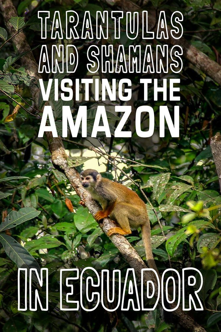 Have you ever wondered what it's like visiting the Amazon in Ecuador? We'll Mariana has laid out how her tour was all the way from tarantulas to shamans.
