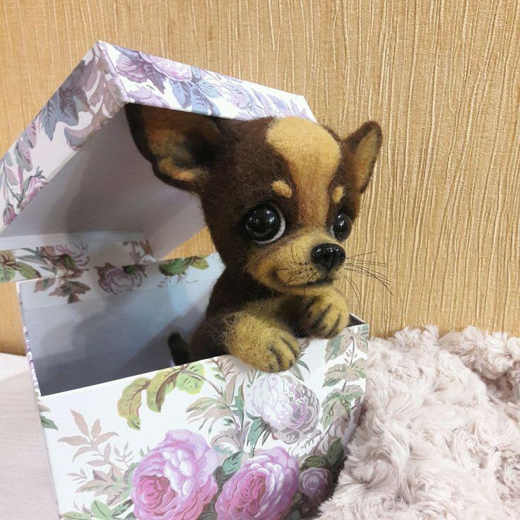 Купить Чихуахуа Шоколадка - чихуахуа, шоколад, собачка, той-терьер, щеночек, щенок чихуахуа