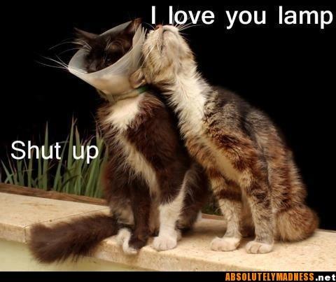 .haha love love