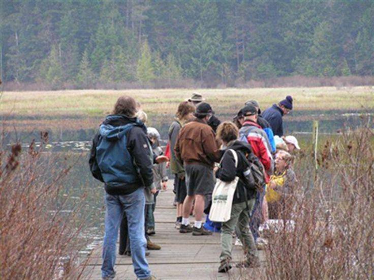 Hamilton Marsh is a beautiful wetland 3 kilometers long and 1/2 kilometer wide - the largest wetland between Nanaimo, Cumberland, and Port Alberni. #ExploreCanada #exploreBC #exploreVancouverIsland #myPQB