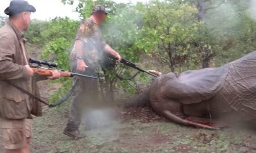 Pétition : Mettre en prison Pascal Omelta, Christophe Morio et Luc Alphand pour avoir tué un éléphant sans défense!