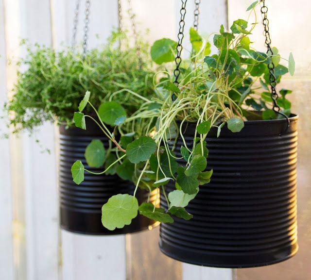 Zitronenbaum aufhängen Balkon coole Ideen Zimmerpflanzen