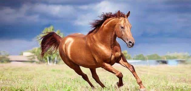 تفسير رؤية الحصان في المنام لابن سيرين Horses Animals