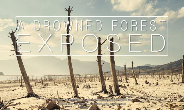 VIDEO Drowned Forest Exposed: a Liesel Kershoff #timelapse