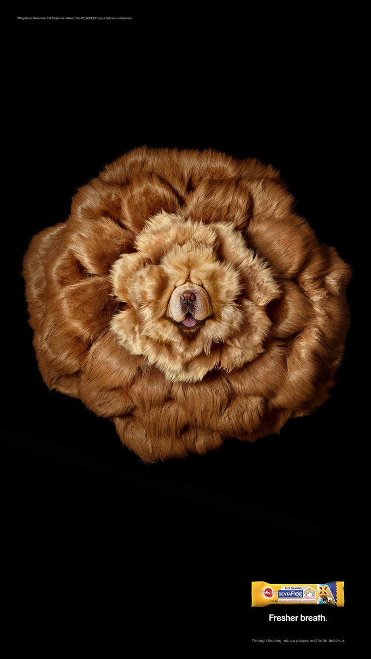 Chien ou fleur ?