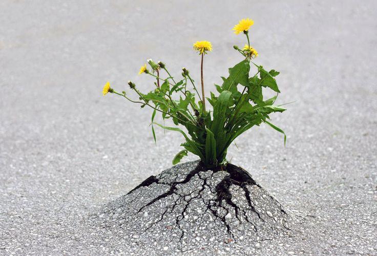 Apesar de toda a destruição sistemática do planeta, a natureza resiste, quase numa guerra de guerrilha. Selecionamos imagens que mostram o lado belo, subli