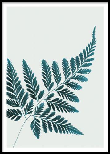 Petrol Fern, poster. En snygg och stilren poster med en ormbunke. Stilsäkra väggen med botaniska posters blandat med något grafiskt samt en eller flera texttavlor så har du en riktigt snygg tavelvägg.