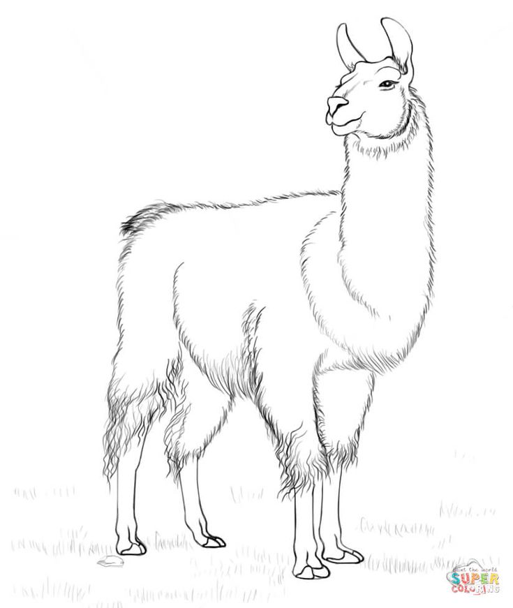 llama coloring page free printable coloring pages