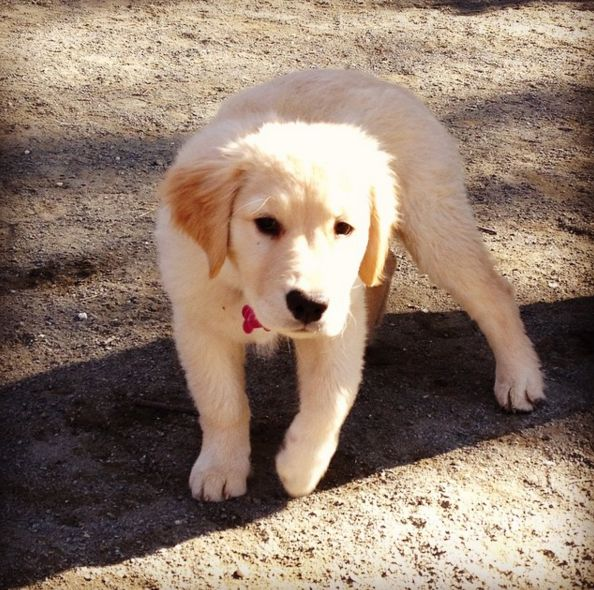 Puppy's day out at Mario Lanza Dog Park! - Philadelphia, PA - Angus Off-Leash #dogs #puppies #cutedogs #dogparks #philadelphia #pennsylvania #angusoffleash