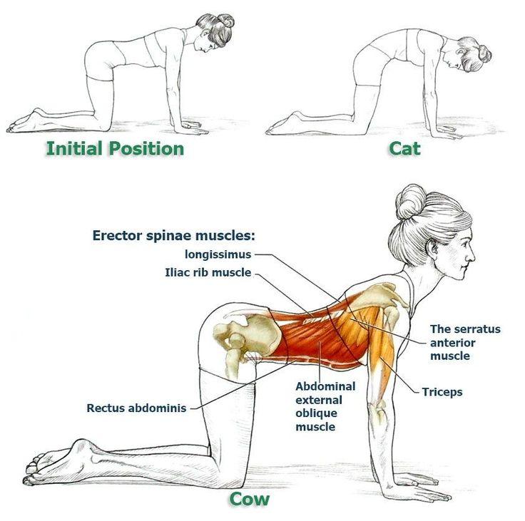 Ejercicios para la espalda. Estiramientos. haraiberia.com