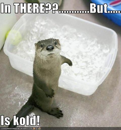 funny otters | Funny Otter picture for desktop |Funny Animal