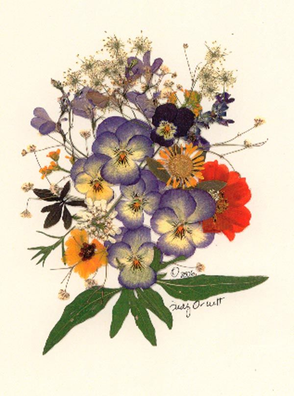 'Posy with Pansies' Pressed Flower Design by QuilliGraphy