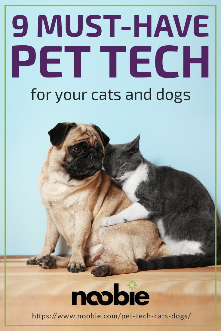 23 Tech-Ahead Pet Equipment To Share With Your Furry Good friend