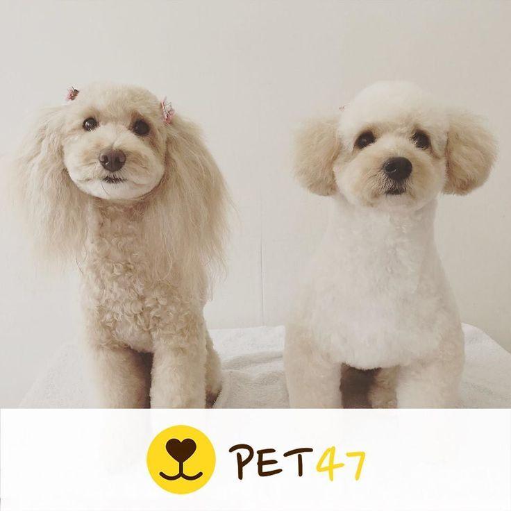 ペット: ララルル 飼い主: ダイヤ  ペット募集中です プロフィールのリンクから登録できます  #pet47 #犬スタグラム #いぬすたぐらむ #いぬ好き #犬飼いたい #犬好きな人と繋がりたい #犬好き #犬欲しい #犬ラブ #犬らぶ #いぬ #犬バカ #愛犬 #ペット #犬 #犬がいないと生きていけません #犬バカ部 #犬との暮らし #犬のいる生活