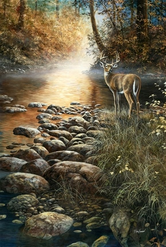 203 Best Images About Paintings Deer Elk Moose On
