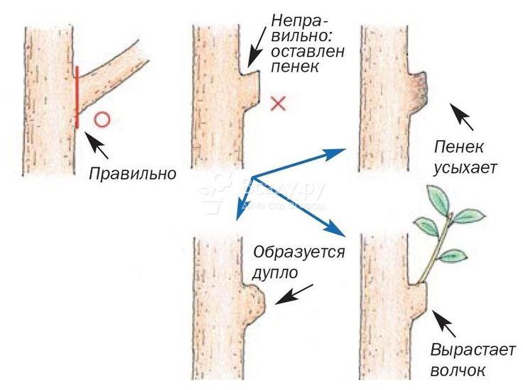 Картинки по запросу фруктовый сад обрезка деревьев