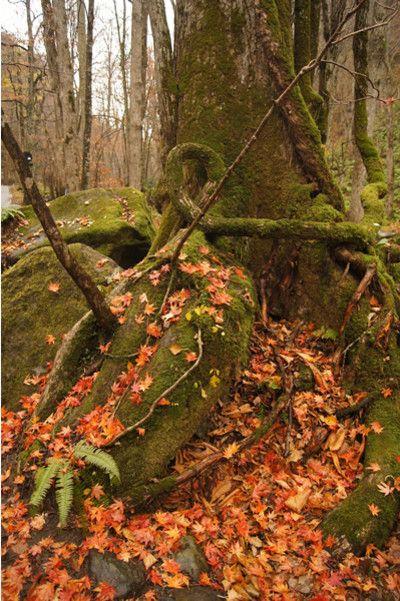 白神山地&奥入瀬<青森・秋の旅>-秋色の奥入瀬渓流を歩く: 流雲日記