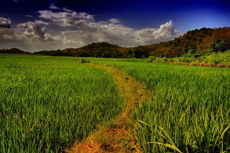 Landscape : Imogiri 2