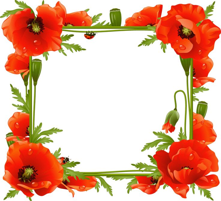 Poppies Transparent Frame