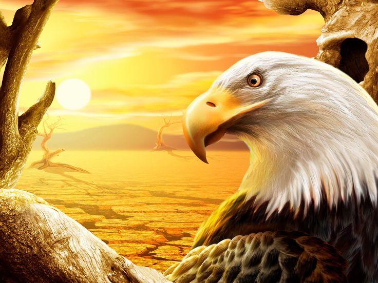 eagle best HD wallpaper   Wallpicshd