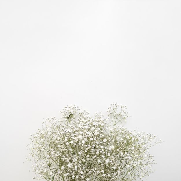 Baby S Breath White Flowers On White Surface White Flower Background Babys Breath Flowers Flowers Instagram
