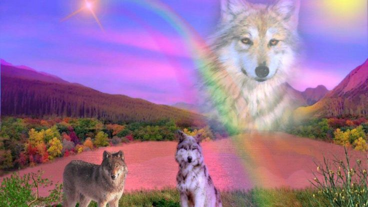 Rainbow Wolf HD Wallpaper. Here You Can Download Free