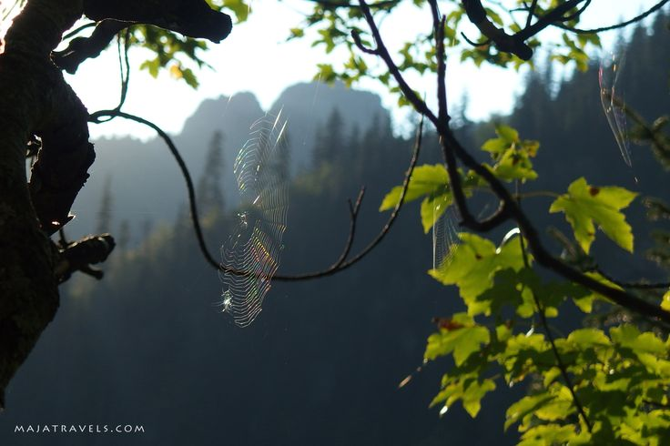 Spider in Tatra Mountains