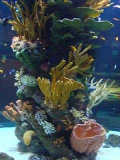Vancouver Aquarium, BC, Canada.