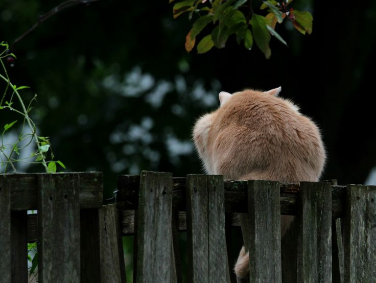 Does this fence make my butt look big?